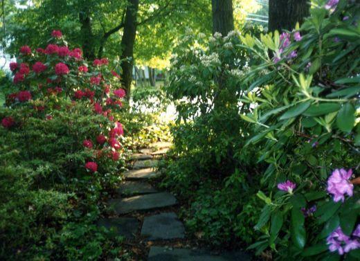 Planning your shady garden woodland garden shrub and for Woodland shade garden designs