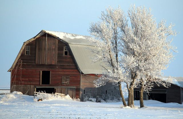 Old Barn-Frosted Morning