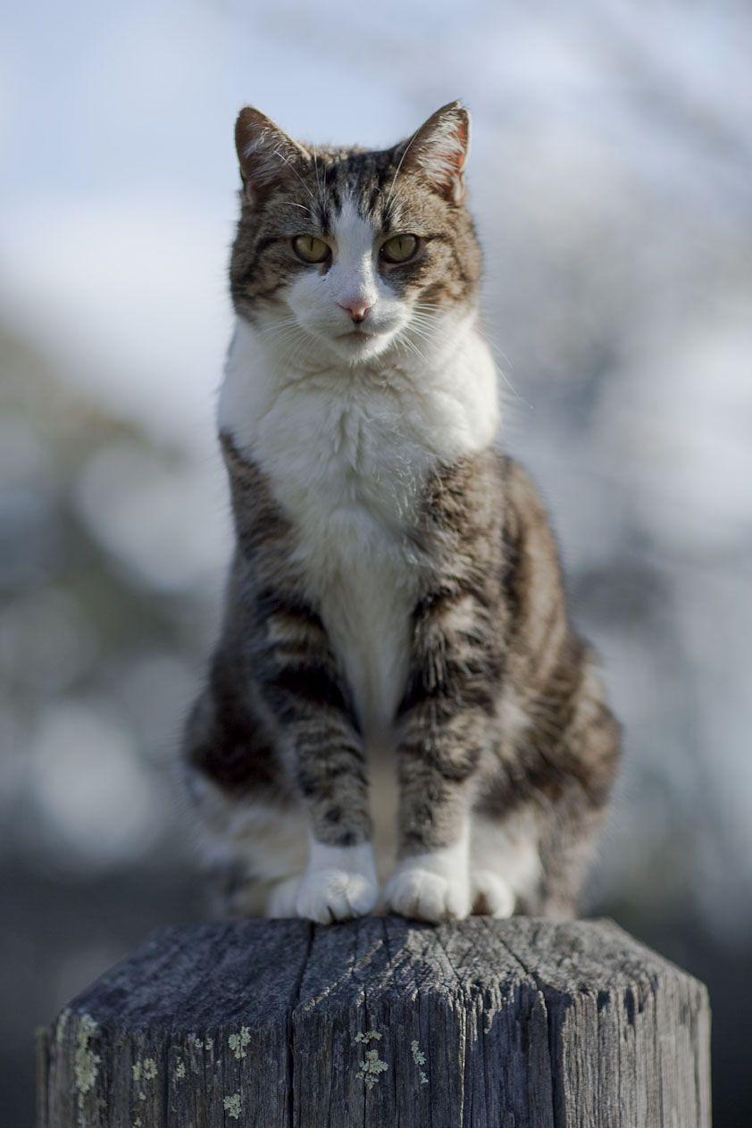 Pin By De Gelukkige Huiskat Katteng On Animals Cats Cats And Kittens Cool Pets