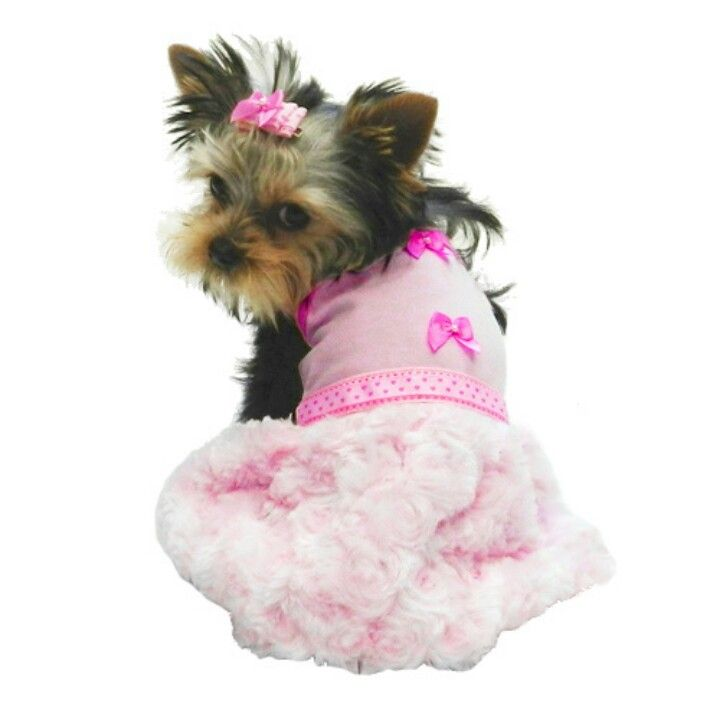 Wonderful Terrier Bow Adorable Dog - c1ccfdcfad98b344bb6214dfc524ac55  Graphic_496248  .jpg