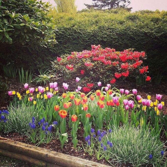 Tulip garden | Gardening | Pinterest | Gardens, Flowers and Spring bulbs