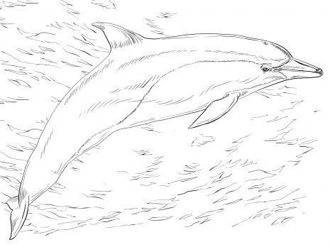 Common Dolphin | burning wood | Pinterest