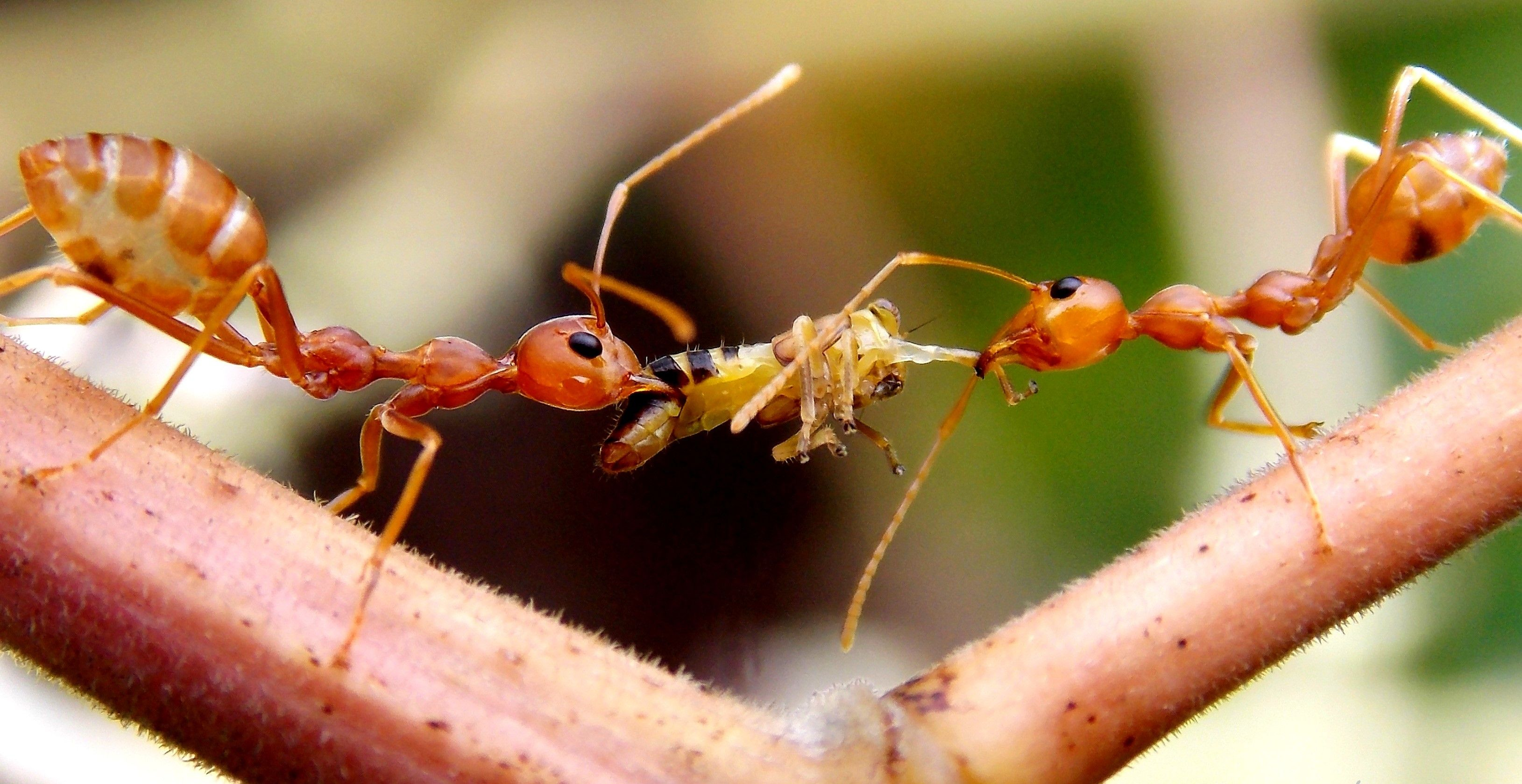 14+ What animals eat ants ideas in 2021