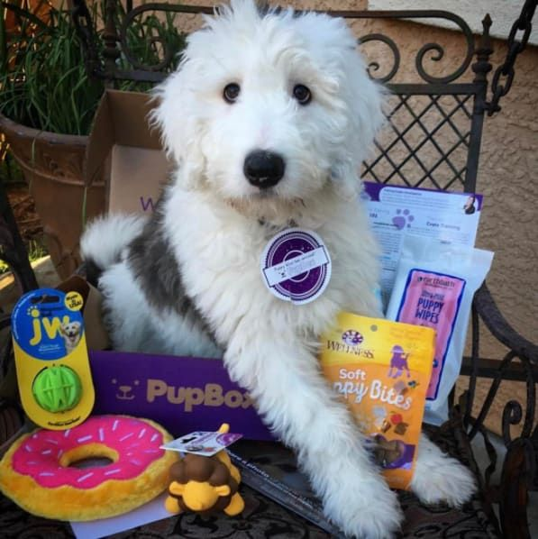 19 Subscription Boxes For People Who Love Their Dog More Than Life Itself