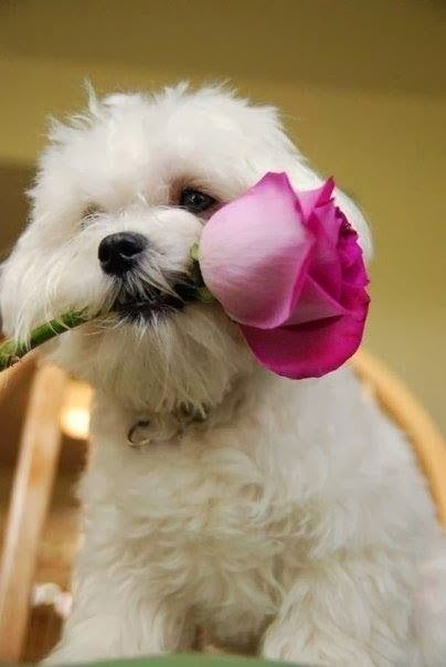 Dog With A Flower In His Mouth Cute
