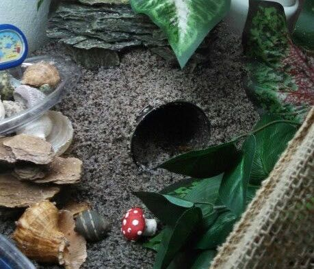 Use a jar to create a humid cave for your hermit crabs! #DIY- PetDIYs.com