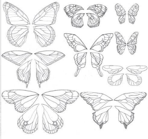 Intricate butterfly wings