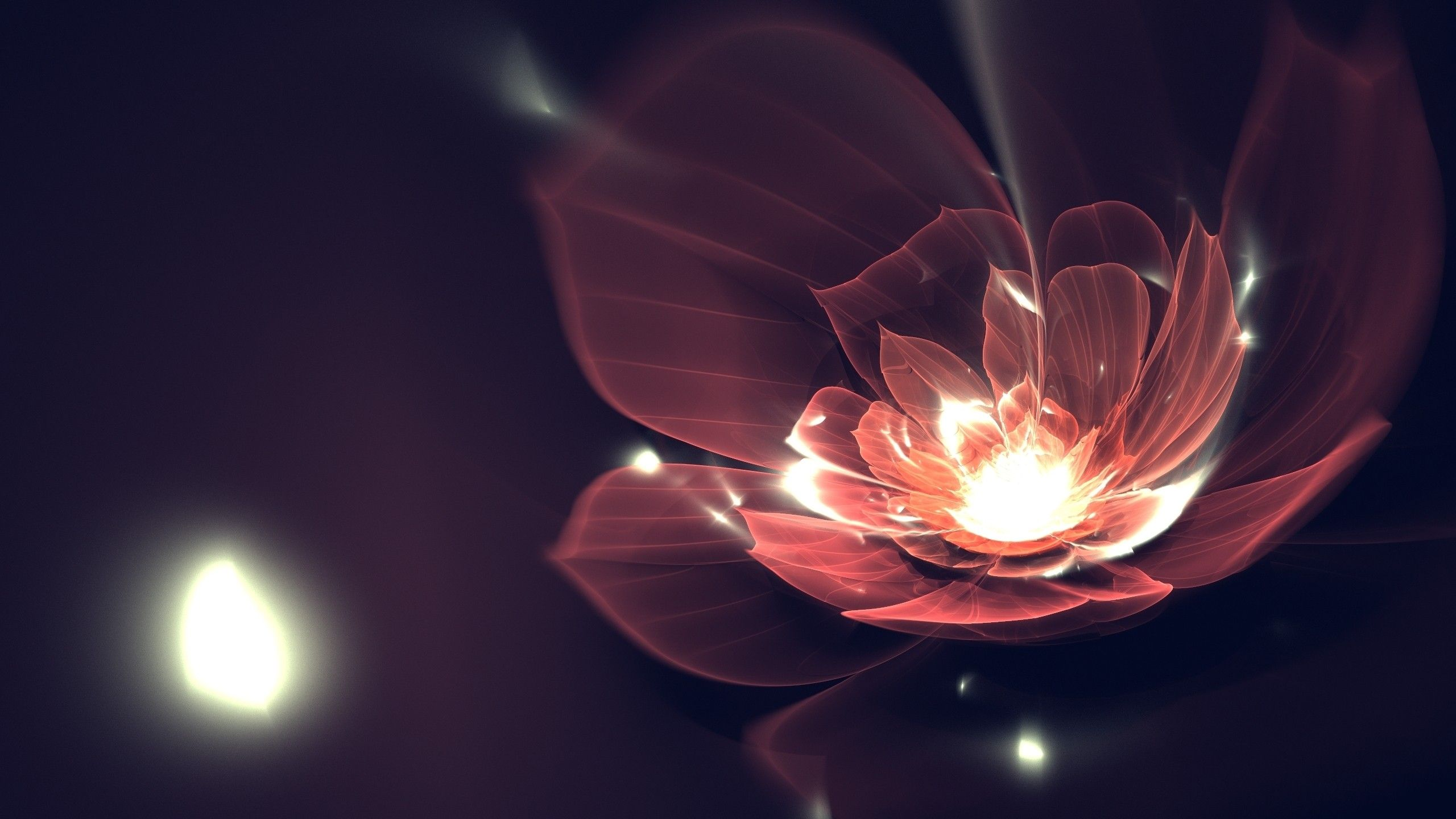 Abstract Dark Flowers Particles 2560x1440 Wallpaper Abstract