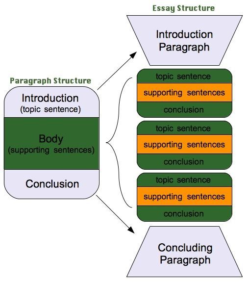 structuring essay paragraphs In an academic essay, the purpose of a paragraph is to support a single claim or idea that helps establish the overall argument or this template presents a very simple paragraph structure.