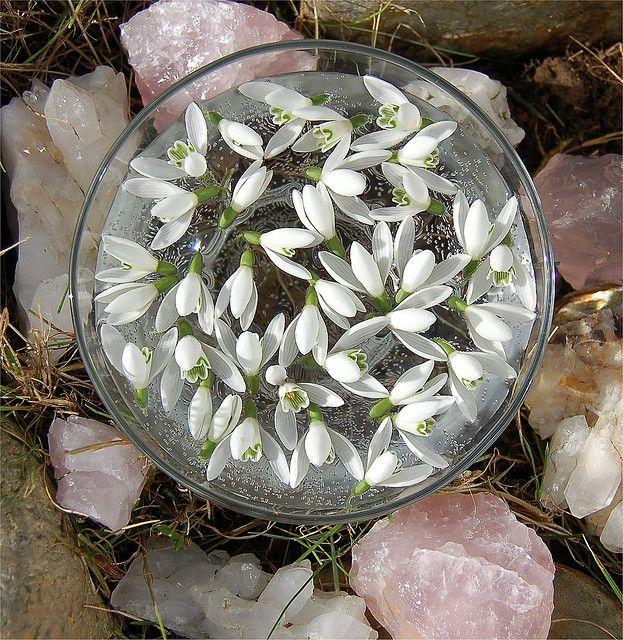 Enchanted Elixir Bach Flower Remedies Flower Essences Green Witchcraft