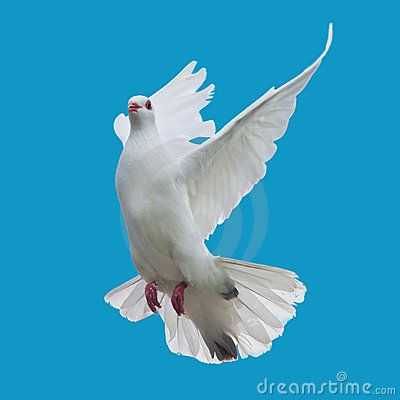 White Doves Flying