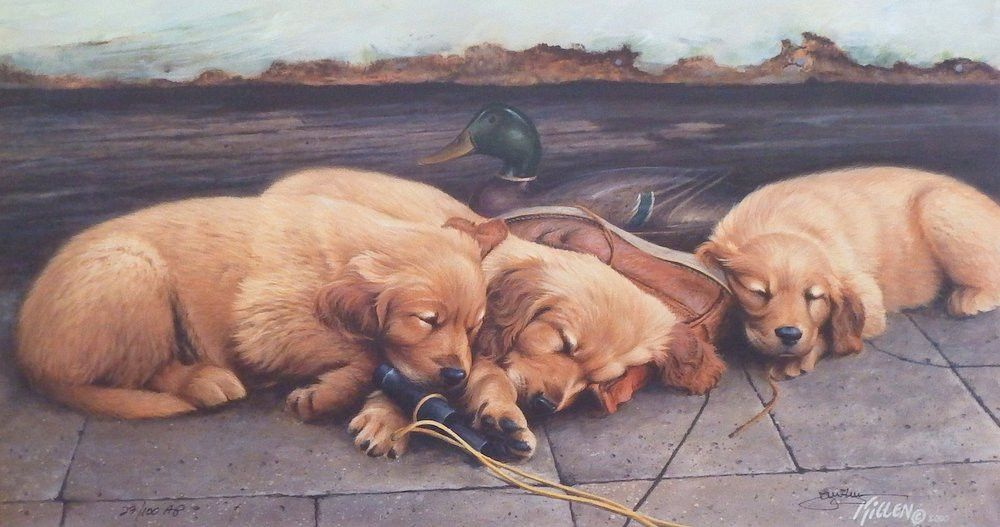 James Killen Golden Dream Golden Retriever Crazy Dog Lady Dogs