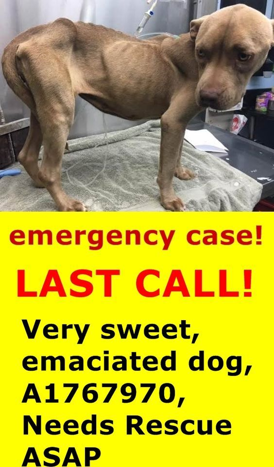 Shelter Pets In Need Suju Bala Twitter To Be Destroyed 3 31 16 List Pets Dog Mommy Dog Adoption