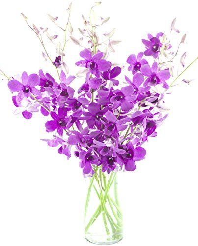 Patilen Com Deals Dendrobium Orchids Orchids Orchid Bouquet