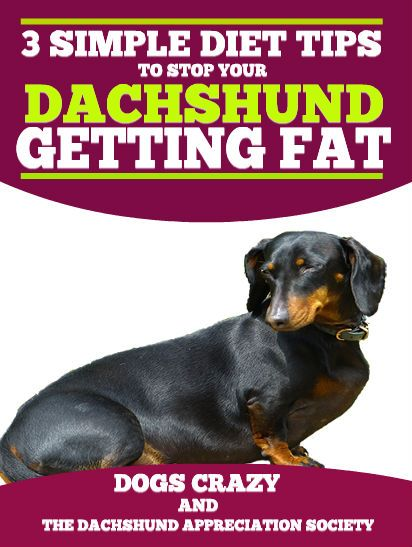 Pin On Gorgeous Dachshunds