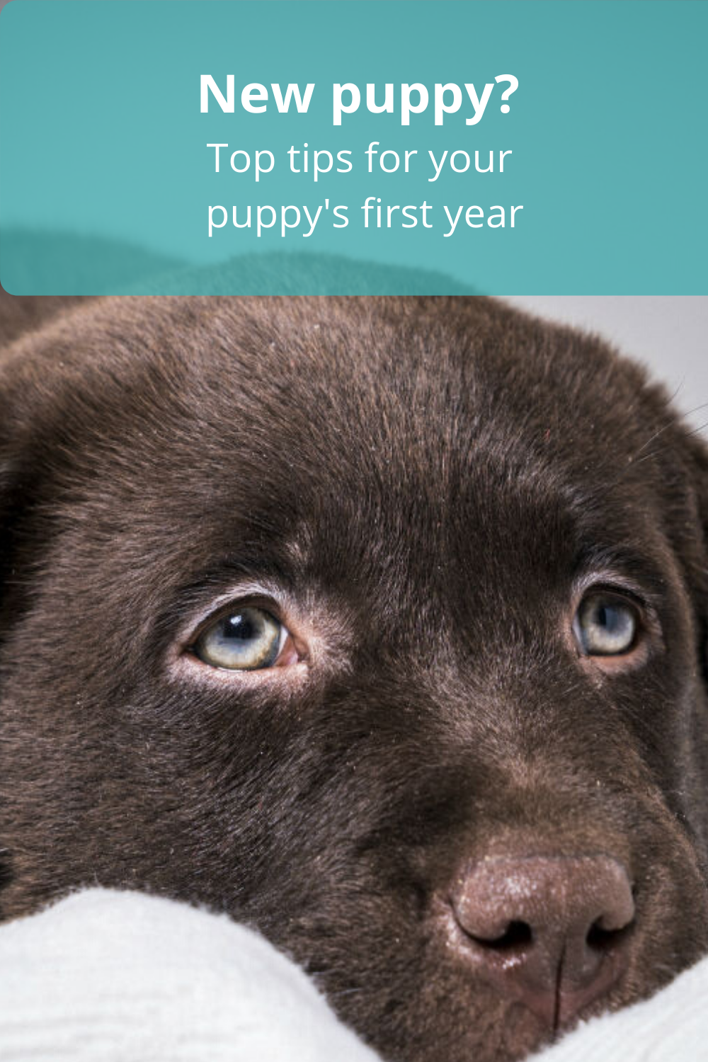 New Puppy Tips In 2020 New Puppy Puppies Puppy Top