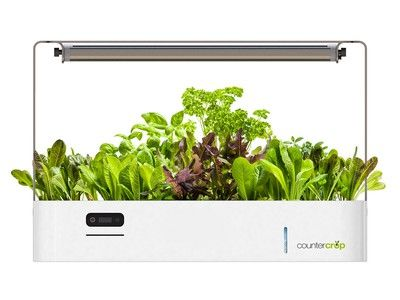 Plant Your Kitchen Garden In Your Kitchen With This 400 x 300