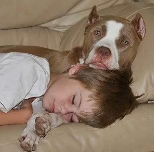 Pin By Jennifer Carter On Love A Bull Nanny Dog Dogs And Kids