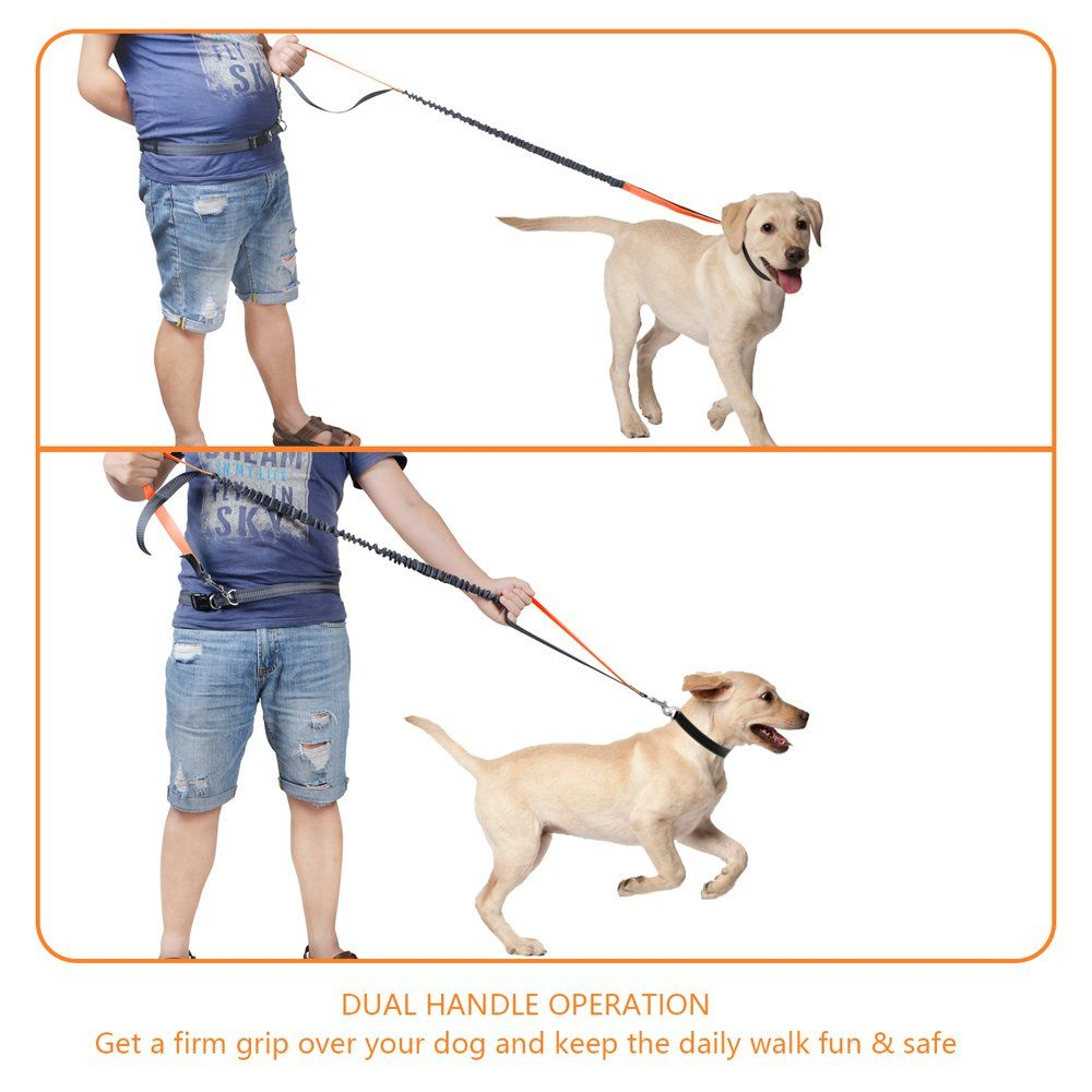 Hands Free Dog Leash With Retractable Leash Strong Bungee Dog