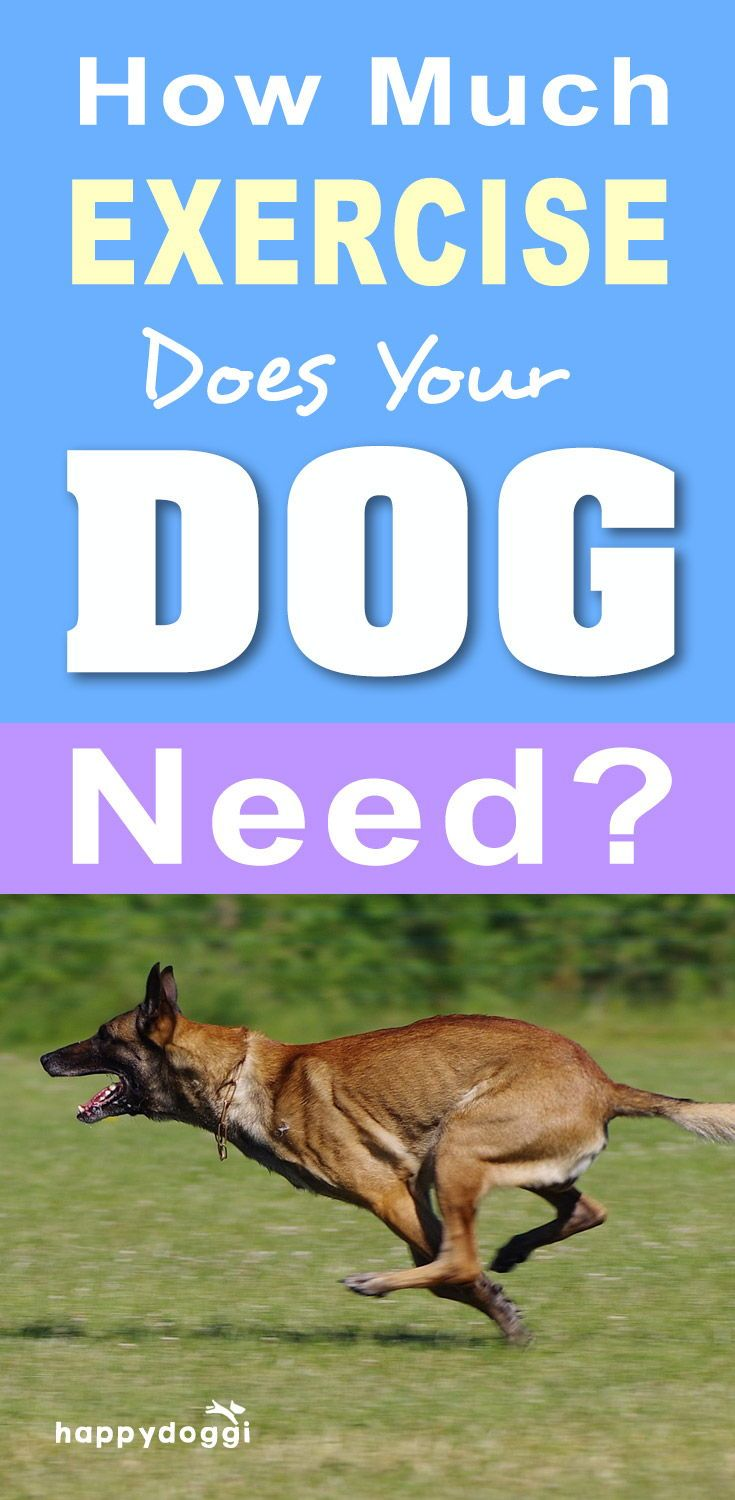 How Much Exercise Does Your Dog Need? Dog activities