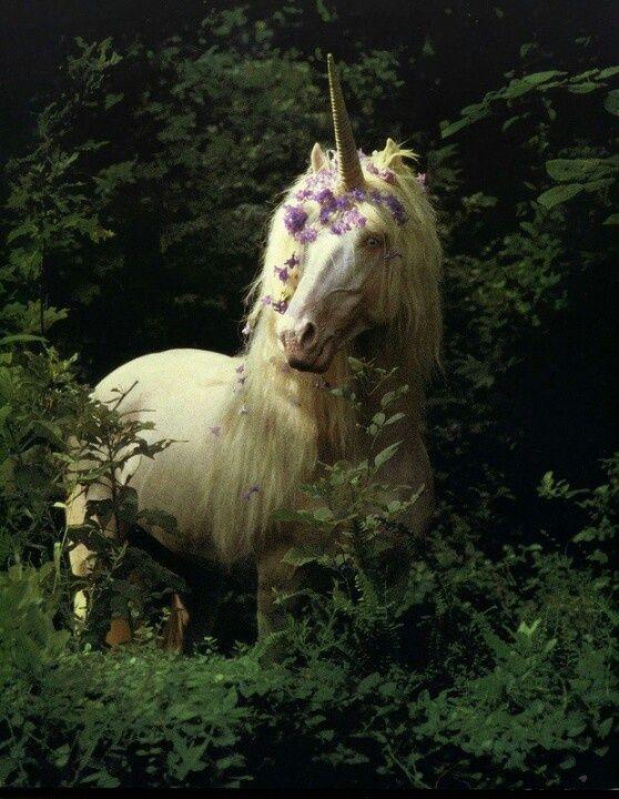 Unicorns And Fairies Real Real Unicorn Pi...