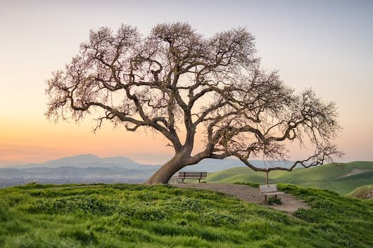 Oak tree and Mount Diablo. California - Tadashi Ogitsu - Google+
