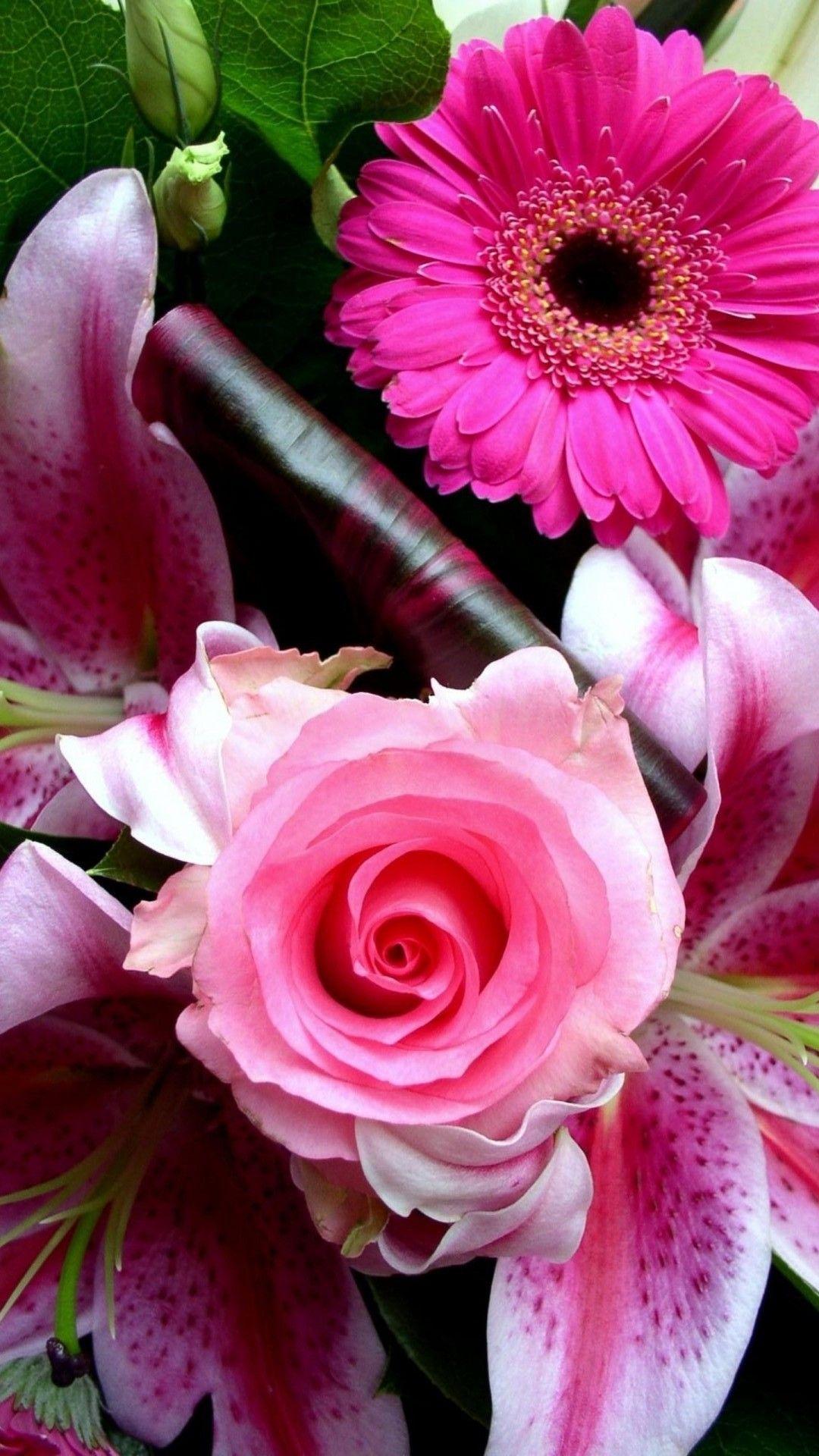 Iphone Wallpaper Hd Pink Flower Best Hd Wallpapers