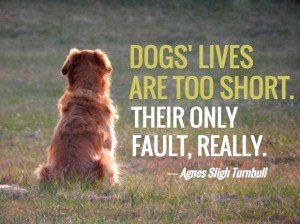 Dog Loss Quotes Inspiration 13 Loss Of A Dog Quotes Comforting Words After Losing A Dog