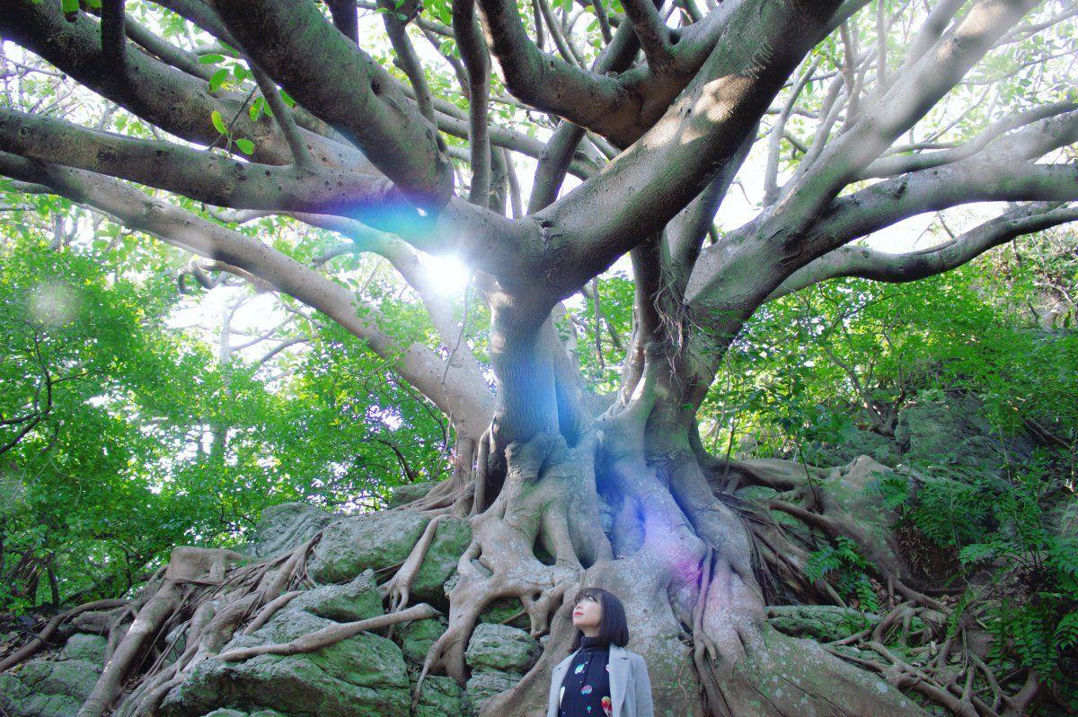 まるでラピュタ 岩を抱きしめるアコウの木 木 岩 風景