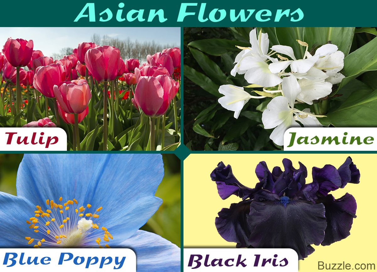 A Complete List of Asian Flowers With Spellbinding