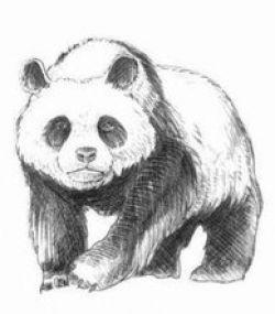 panda zeichnen anleitung dekoking com zeichnen malen in 2019 zeichnen zeichnen anleitung. Black Bedroom Furniture Sets. Home Design Ideas
