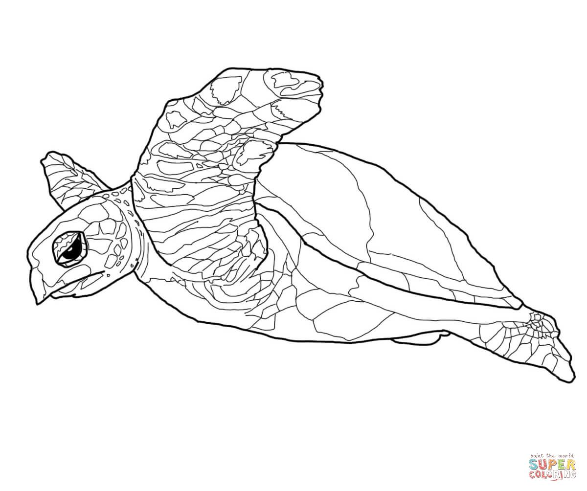 Realistic Turtle Coloring Pages Google Search Animal Coloring