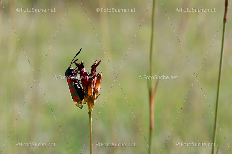 Foto Kafer Grashalm Makro Fotos Gras