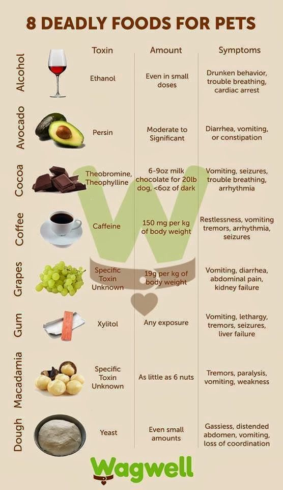 Deadly Foods For Dogs