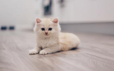 Kitten In 2020 Cats Your Pet Kitten