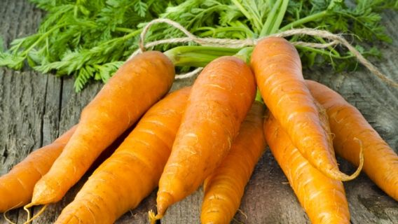 carottes comment les planter potager carrots maple. Black Bedroom Furniture Sets. Home Design Ideas