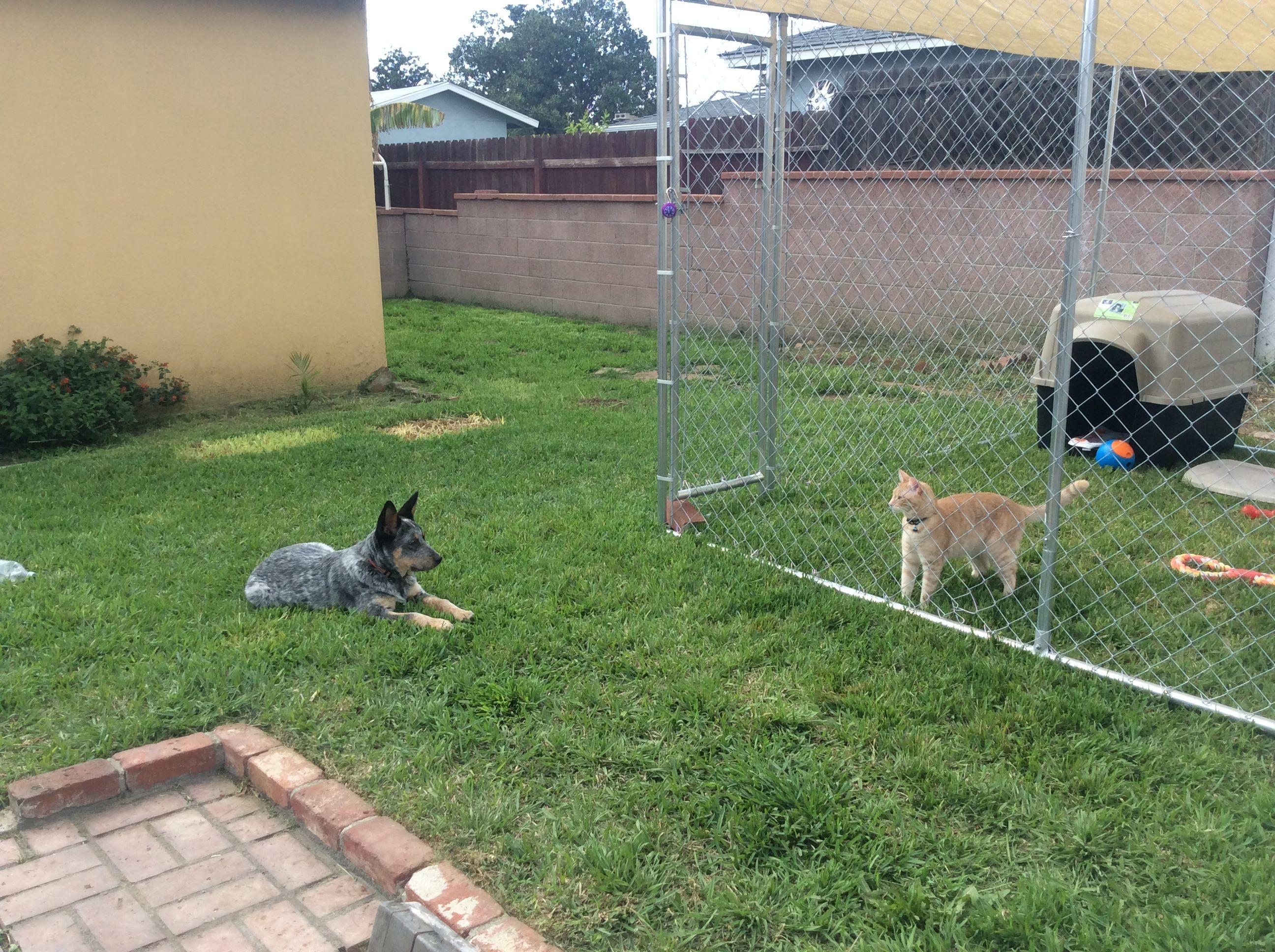 Pin By Ronald Lopez Jr On Puppy Blue Heeler Puppies Heeler