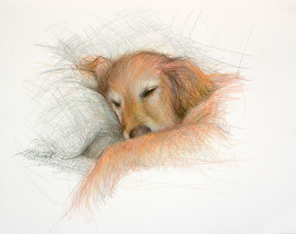 Kirby an old Golden by Fredericka Howard