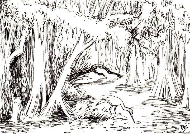 sketch the everglades  Google Search  ART  Pinterest  Sketches