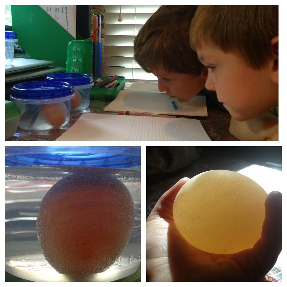 Egg in Vinegar Lab - Alexander Mendez
