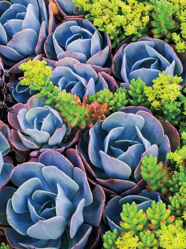 13 Great LowWater Plants – Low water plants
