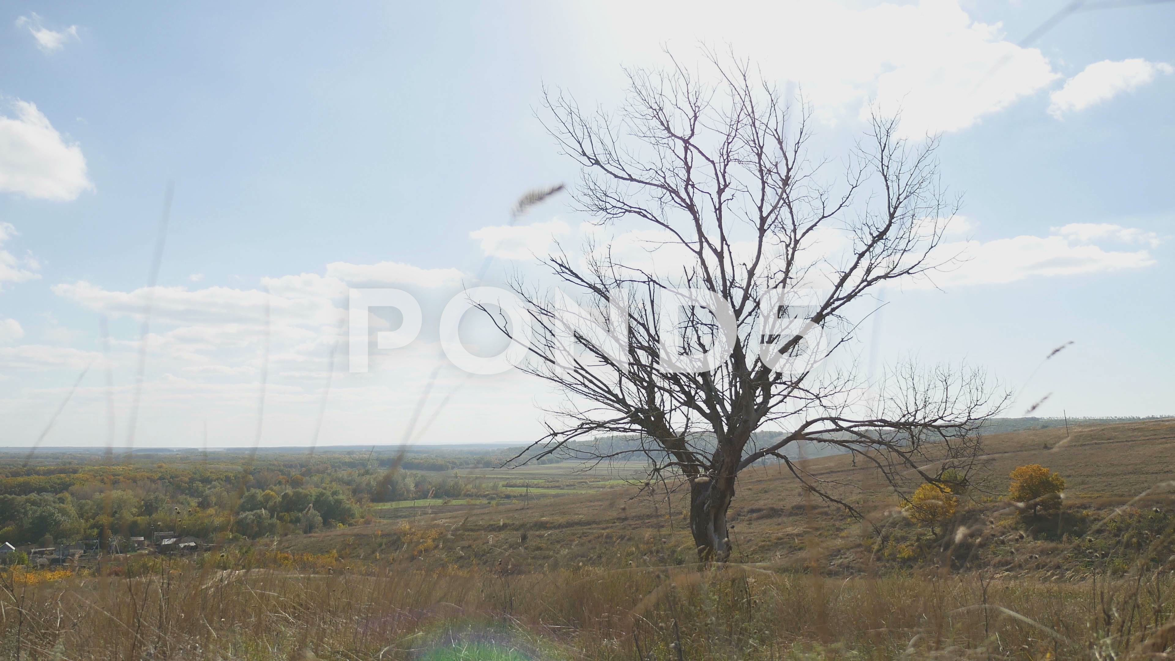 Old Dry Tree In The Autumn Without Leaves Dry Grass Landscape Nature Stock Footage Autumn Leaves Dry Tree Grasses Landscaping Dry Tree Landscape