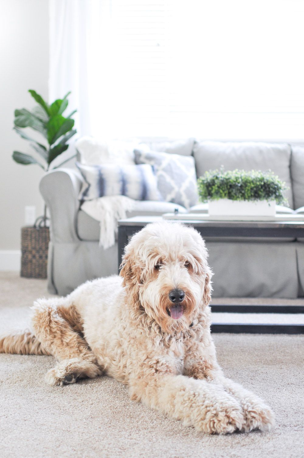 The Best Pet Proof Carpet for your Home Carpets for kids