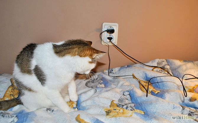 Keep Cats from Chewing on Electric Cords and Chargers | Cord, Cat ...