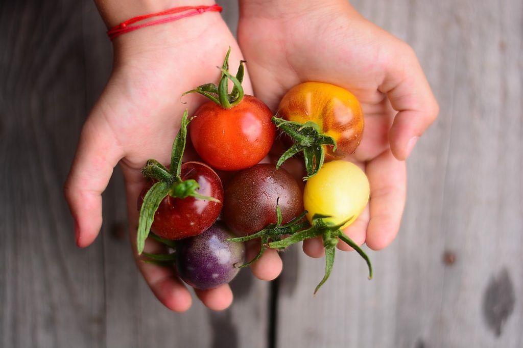 Heißhunger Auf Tomaten