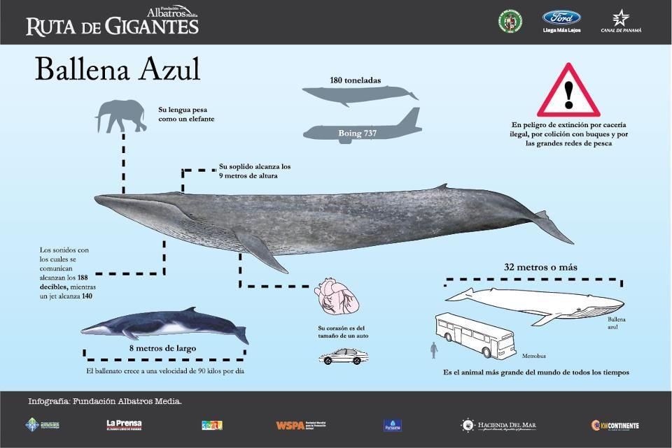 La ballena azul | lo que encuentro por ahi... | Pinterest | La ...