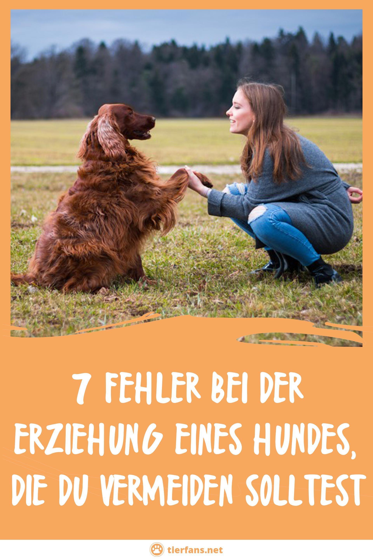 7 Fehler Bei Der Erziehung Eines Hundes Die Du Vermeiden Solltest Hundeerziehung Erziehung Hunde