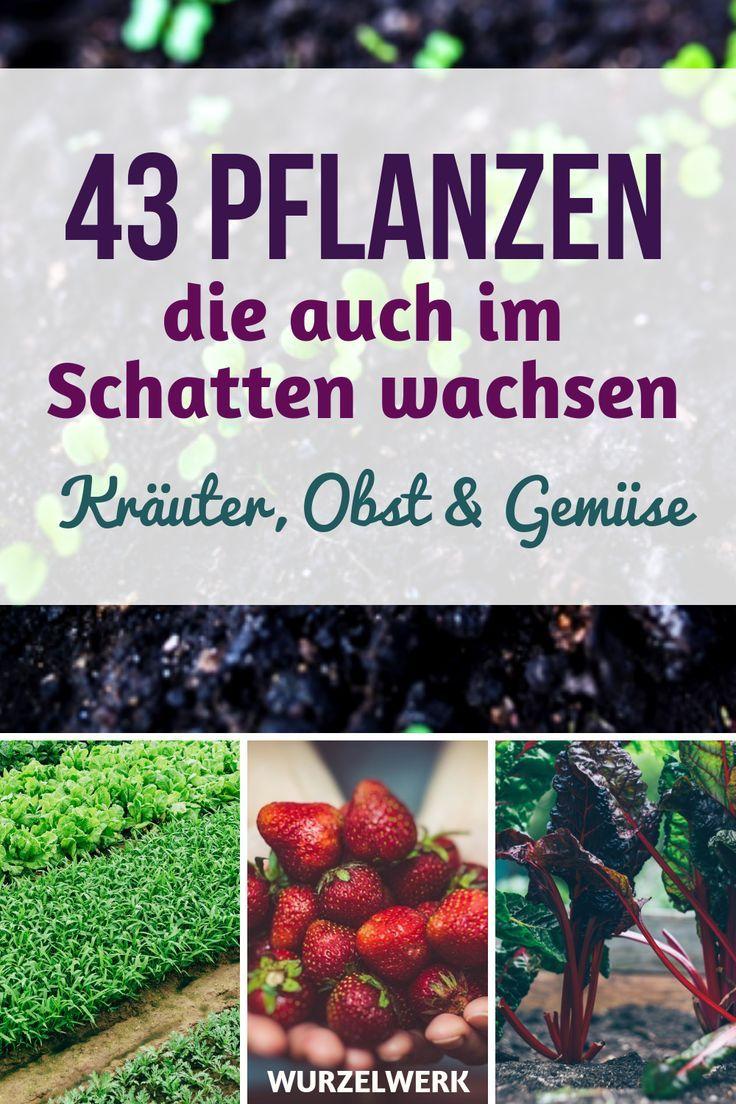 43 Kräuter, Obst- und Gemüsepflanzen, die auch im Schatten wachsen #howtogrowplants