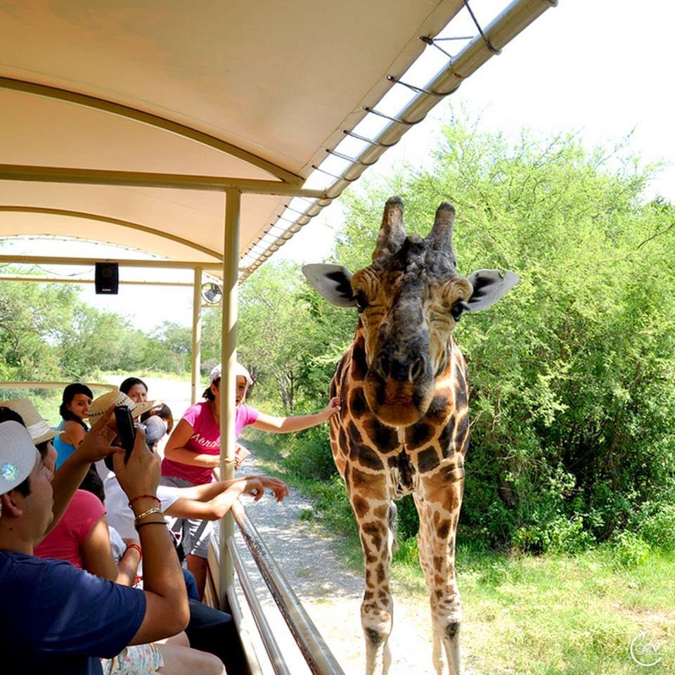 Bioparque Estrella Monterrey Disfruta de atracciones divertidas para ...