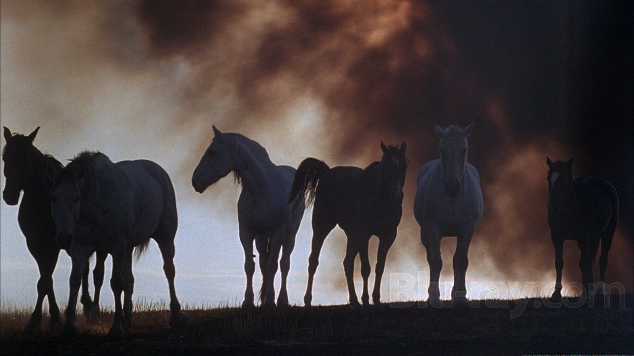 Days of Heaven: Terrence Malick. Cinematography by Néstor Almendros